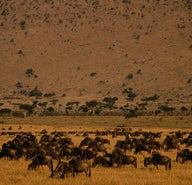 Migration and the Masai Mara