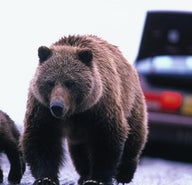 How NOT to get eaten by a grizzly in Glacier National Park