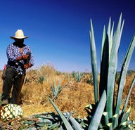 Agave adventures: sipping the spirits of Mexico