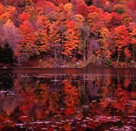 Feast on New England's fall foliage