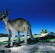 Watching Australia's wildlife