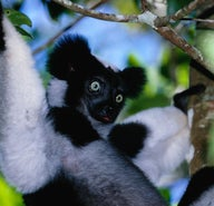 Madagascar's wondrous wildlife (and where to see it)