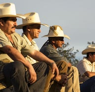 Coleadero: steer wrangling in Chihuahua