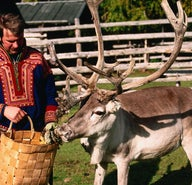 Sweden's winter Sámi festival