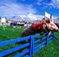 Cows and fried Coke: it's state fair season in the USA!