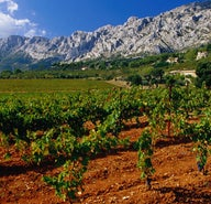 Gastronomic Provence