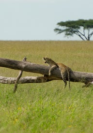 Top things to do in Tanzania