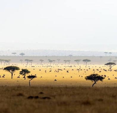 Africa's best wildlife parks