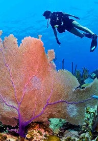 Cuba's best snorkeling and diving