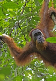 Top things to do in Sumatra