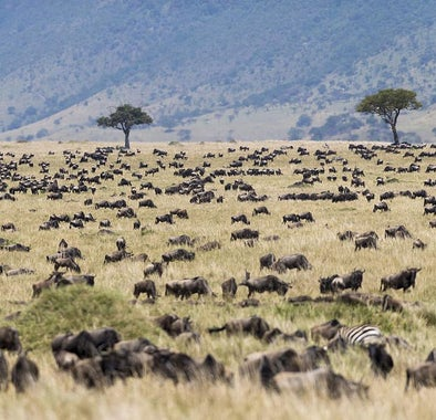 Top things to do in Kenya
