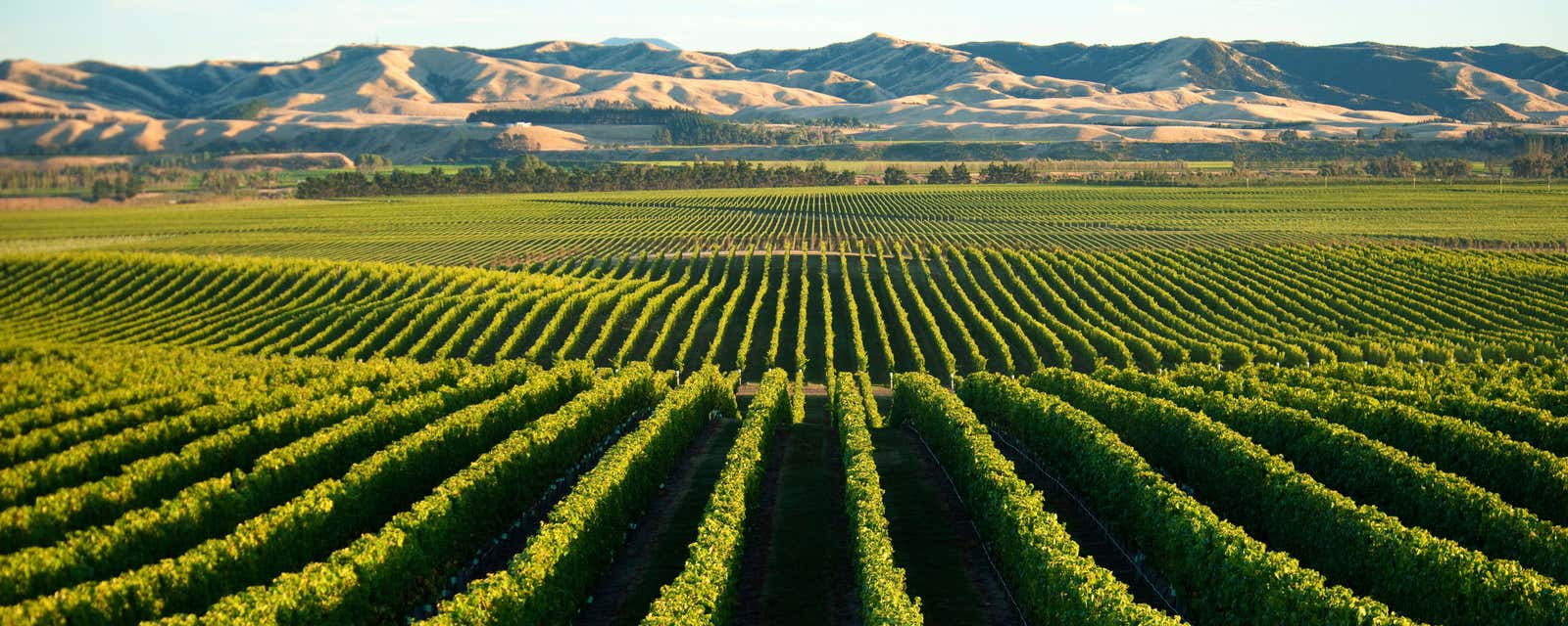 The vineyards of Wither Hills, Malborough, New Zealand.