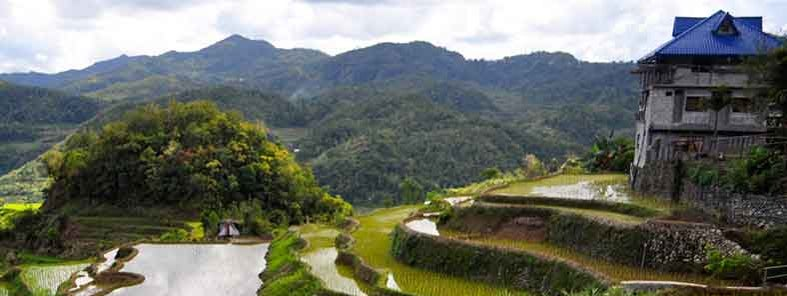 Banaue rice terraces by Madeleine Holland