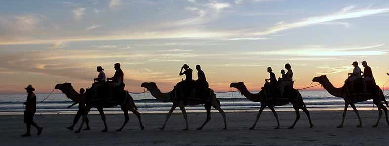 Camels at Cable Beach by lin padgham