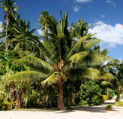 Top things to do in Samoa