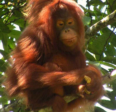 Top things to do in Malaysian Borneo - Sarawak