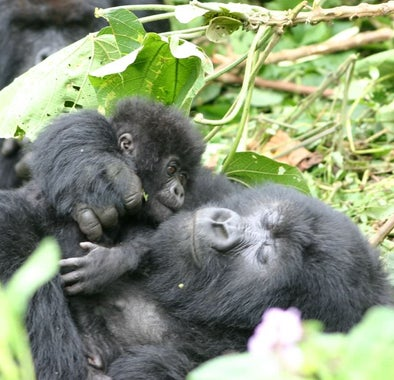Top things to do in Rwanda
