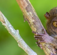 02f0e4bfbdac44b2b597937a6999d717-tarsier-research-development-center