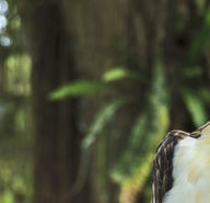 6d6d2b0c4d3c4571a148b5557375ad8d-philippine-eagle-research-nature-center
