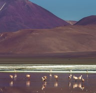 F9ded1cf489144363ee2fbb6d327d140-altiplano-lakes