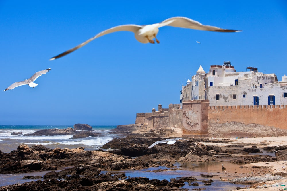Seagulls at Essaouira.