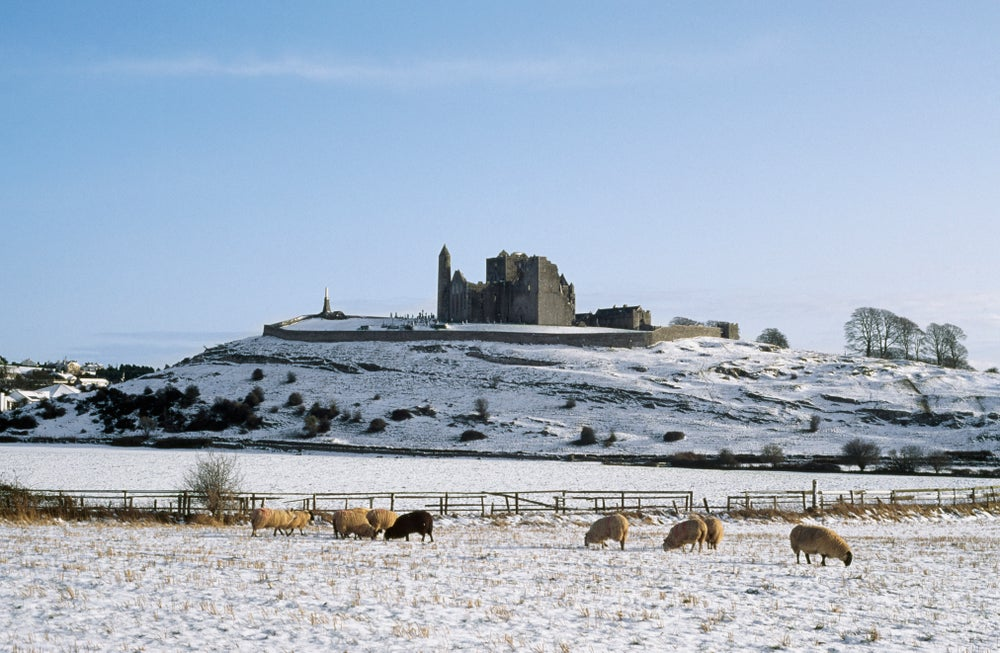 Sheep in the winter and the Rock of Cashel.