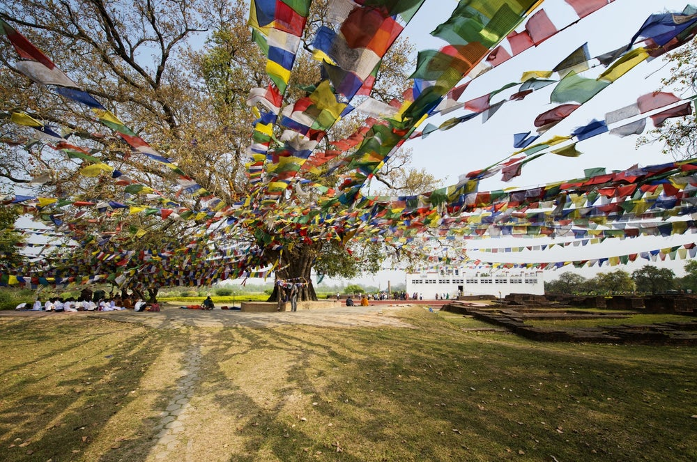 Bodhi tree at Maya Devi Temple, Lumbini