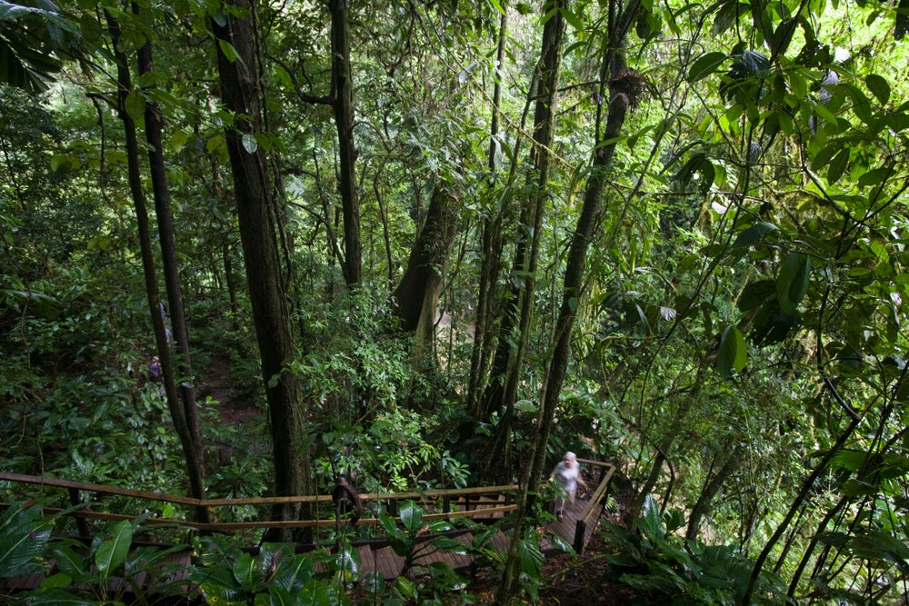 Staircase on the Veragua Rainforest walking path