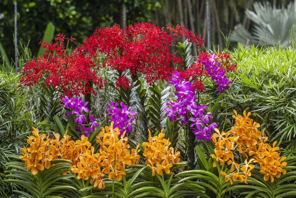 Flowers in the Singapore Botanic Gardens.