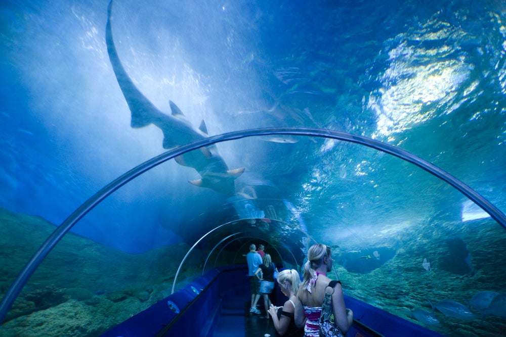 Aquarium of Western Australia.