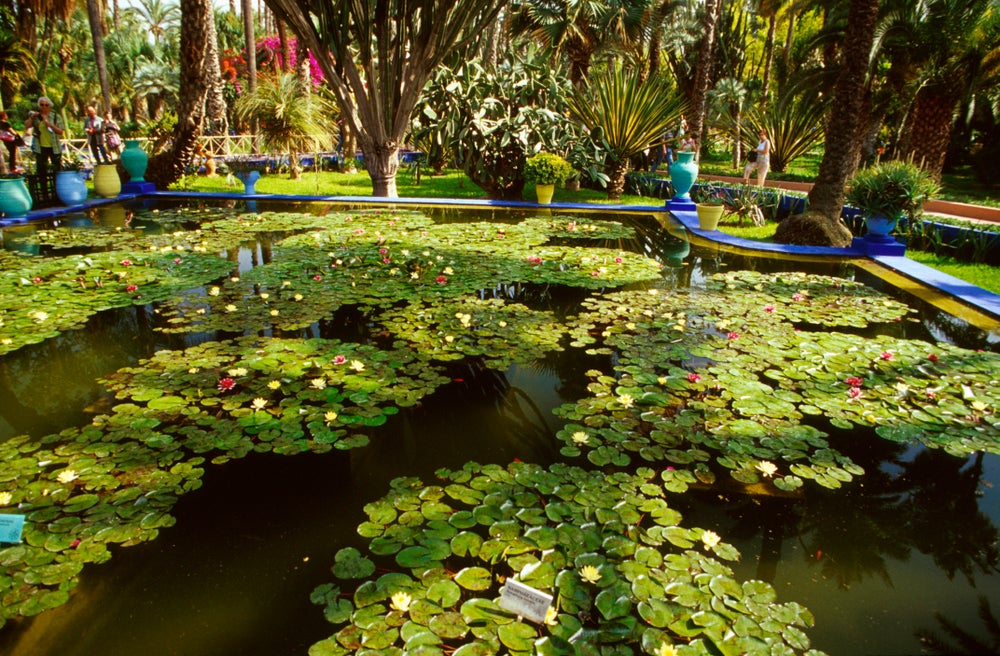 Water lilies and ornamental pond in Jardin Majorelle.