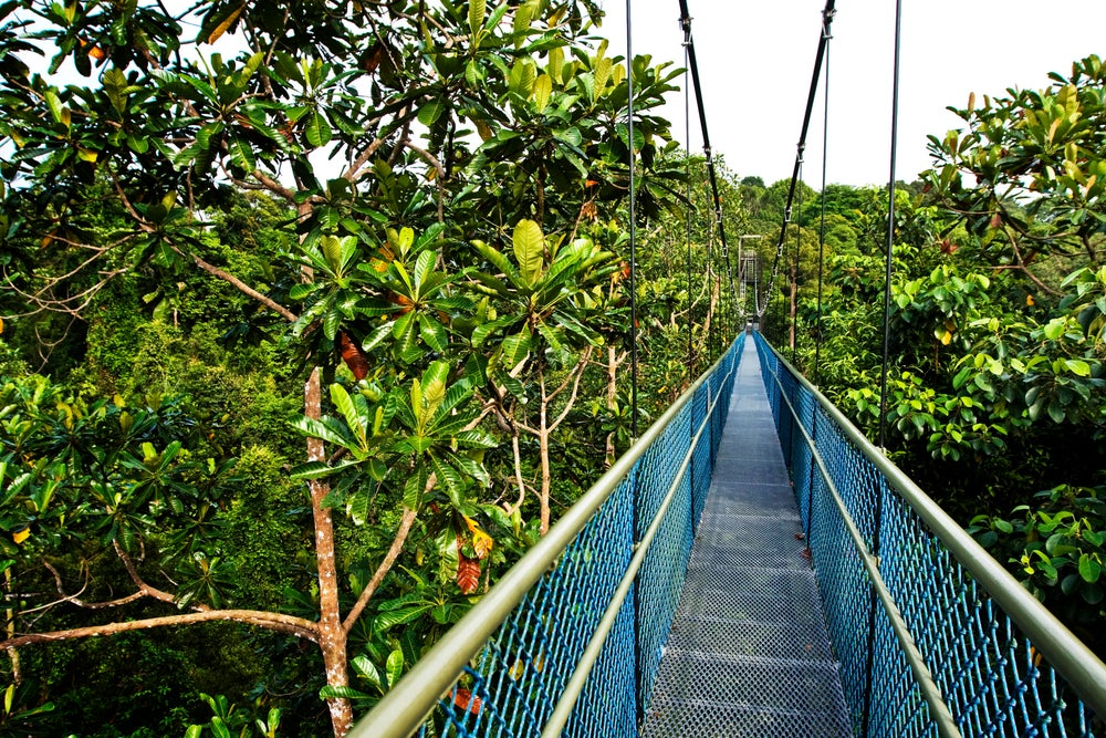 Treetop walk at Macritchie.