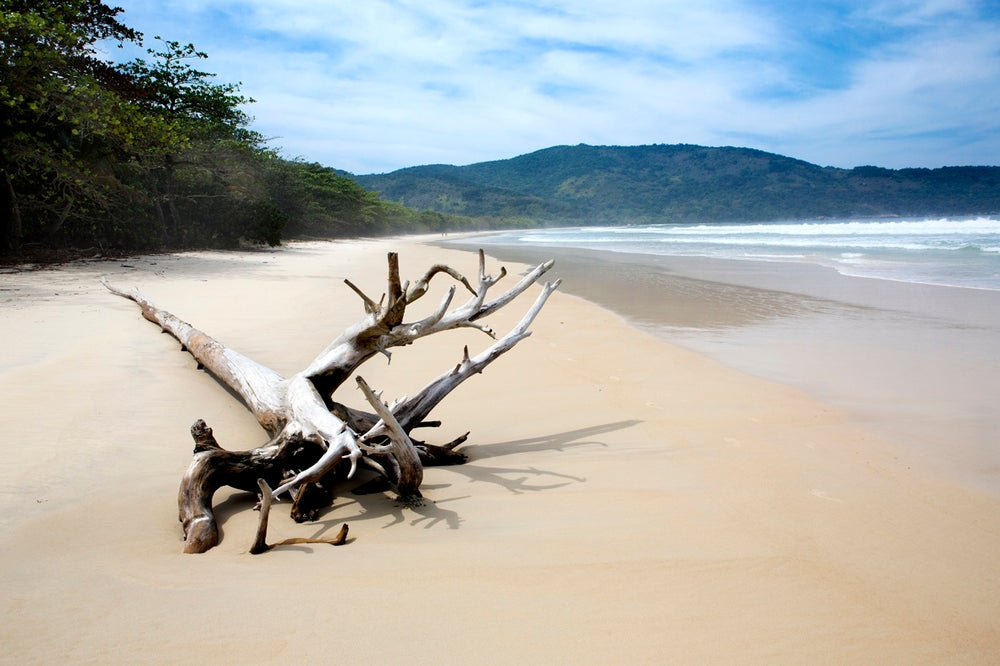 Driftwood tree on beach of Ilha Grande.