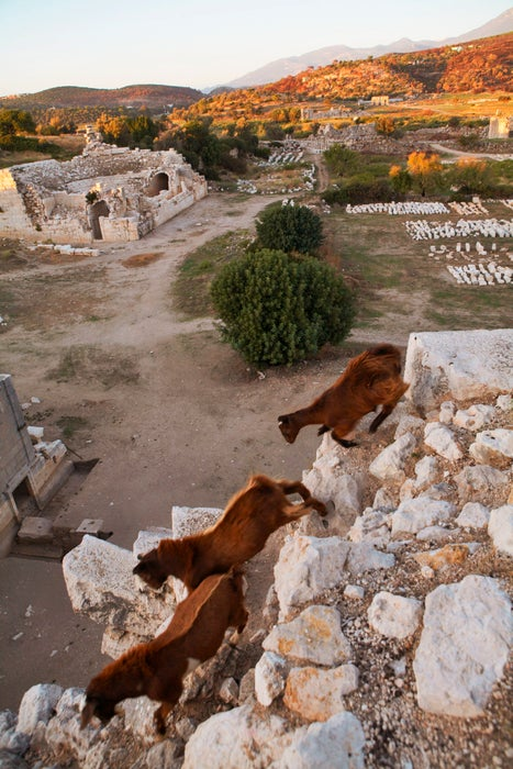 Goats on the ruins of Patara.