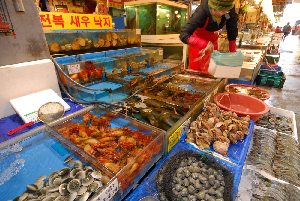 Noryangjin Fish Market. Cockles, Mussels, Conch, Ascidian, Abalone , Octopus, Fish, Sinchon.