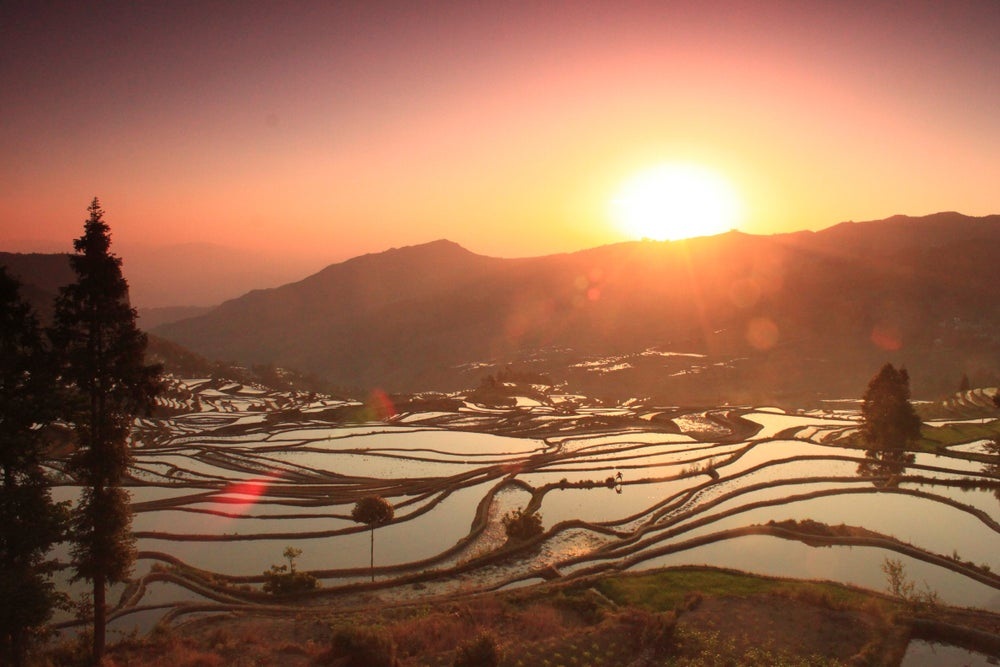 Sunrise on rice terraces.