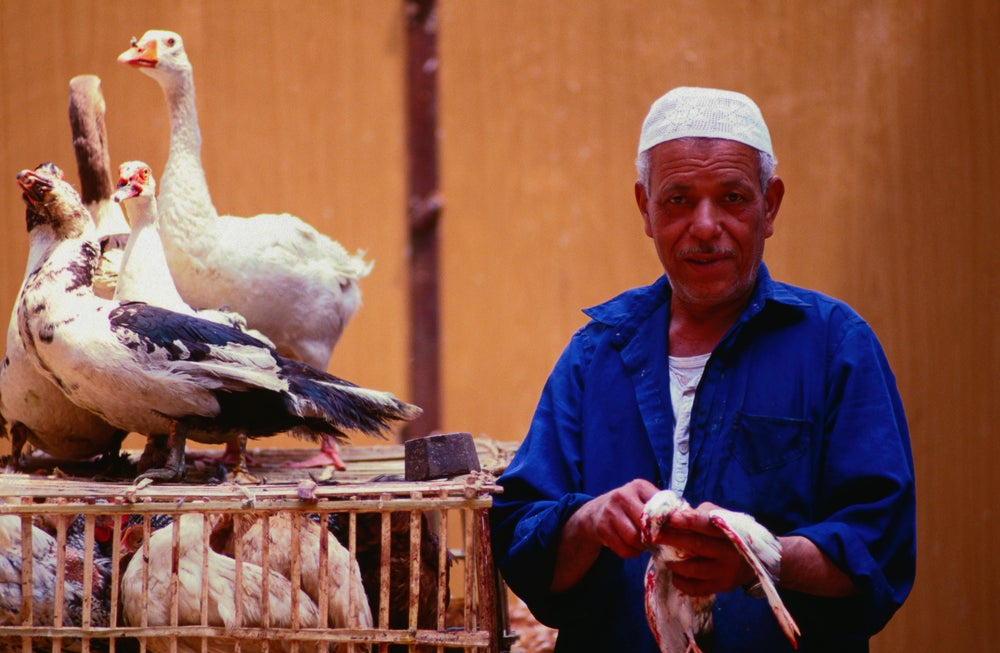 Street scenes along Bab Zuwyla: a man with his geese for sale - Cairo