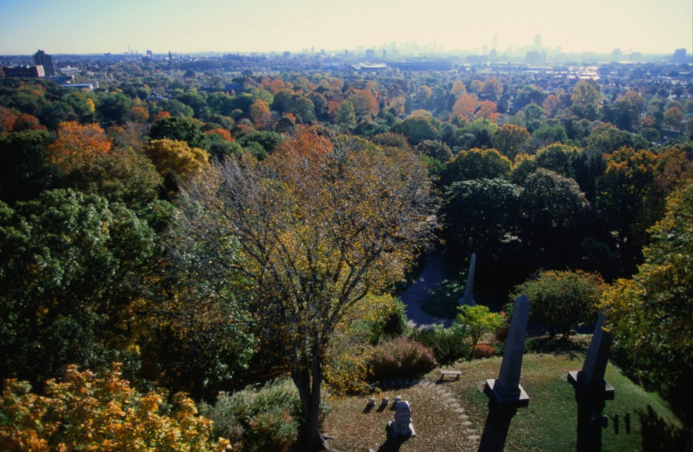 Looking over Mt Auburn Cemetery with a view of  Charles River Valley from the tower.