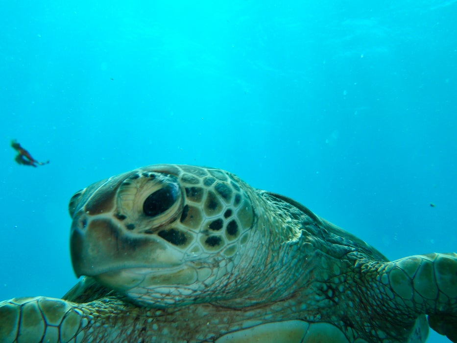 Diver coming face to face with a turtle.