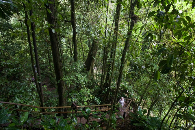 Staircase on the Veragua Rainforest walking path, The Atlantic Slope, Costa Rica