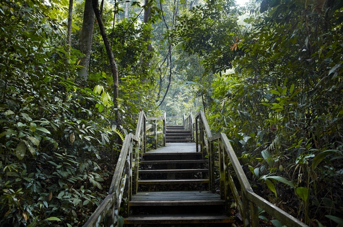 Bukit Timah Nature Reserve, Singapore (city), Singapore (country)