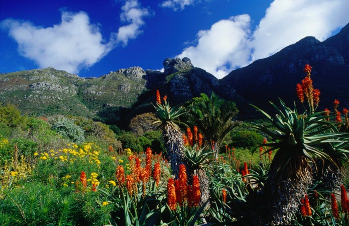 Kirstenbosch Botanical Gardens Lonely Planet