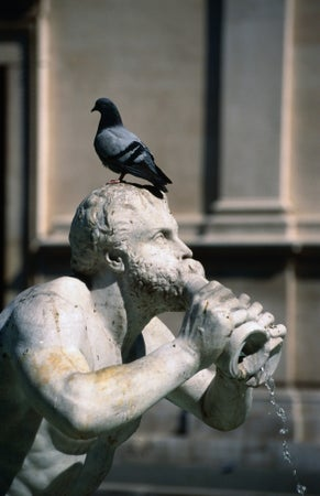 A pigeon sits on the head of a statue of Fontana del Moro (by Giacomo della Porta, 1576), Piazza Navona, Rome, Italy