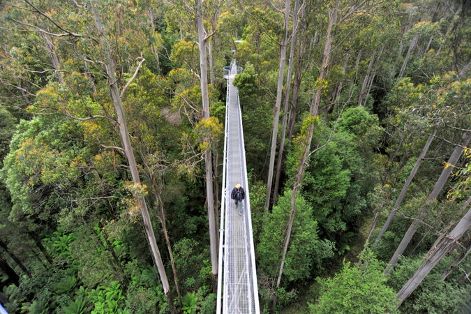 Overhead view of elevated 'Otway Fly' canopy walk, Around Apollo Bay, Australia