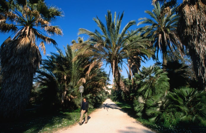 Strolling between palm trees in Rome's Orto Botanico, Rome, Italy