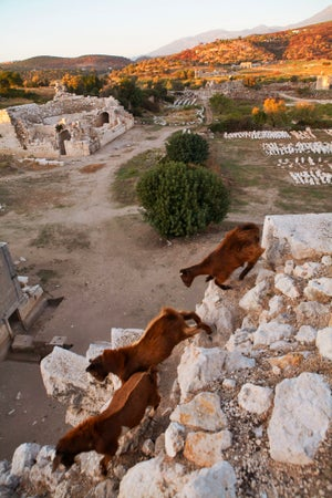Goats on the ruins of Patara, Patara, Turkey