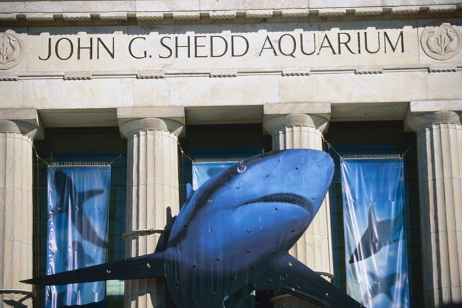 Shedd Aquarium, Chicago, USA