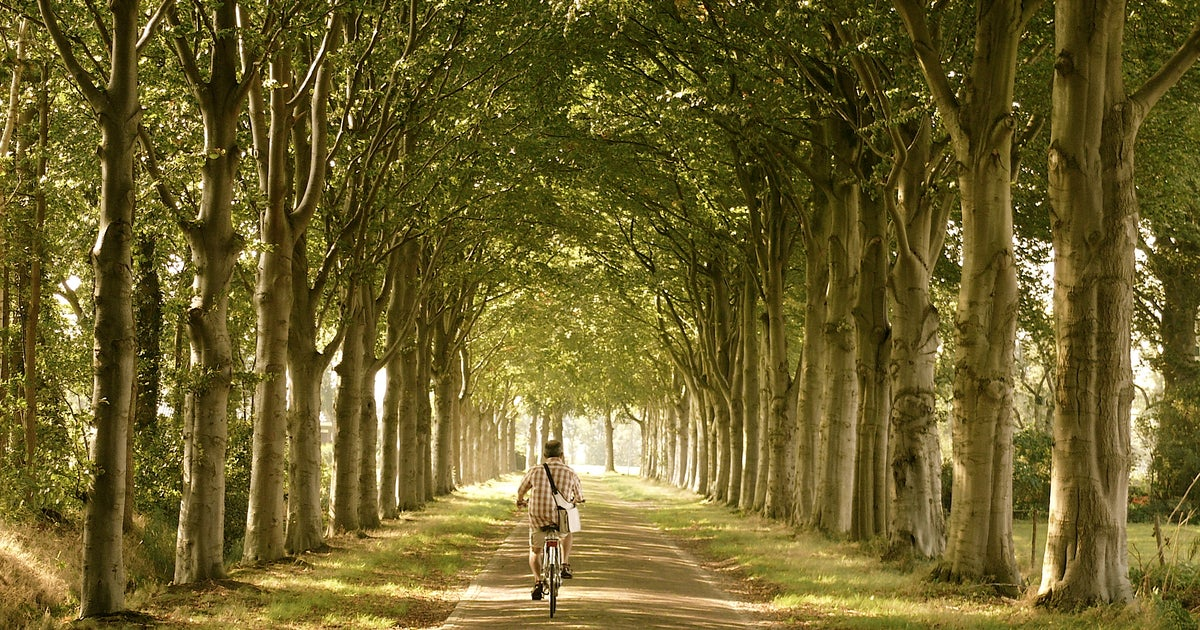 Getting around The Netherlands by train - Lonely Planet
