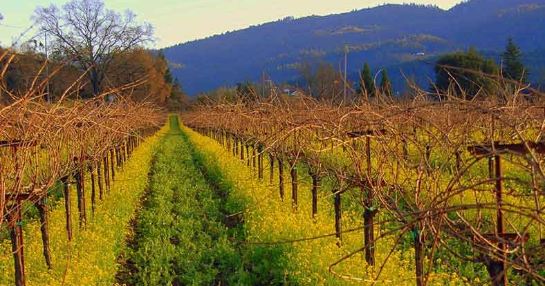 Napa and Sonoma Wine Country - Lonely Planet
