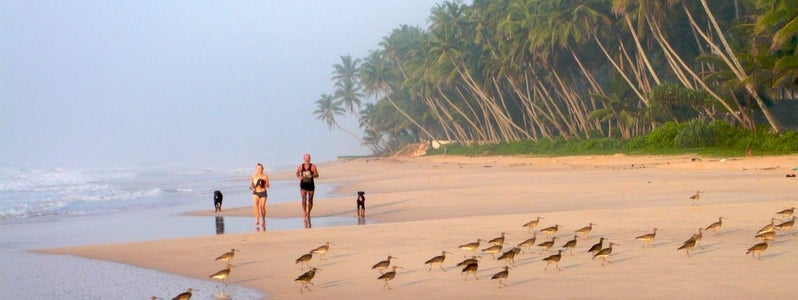 Sri Lanka S Best Beaches